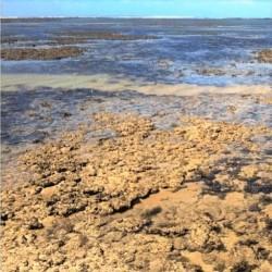 Praia e ilha de Areia Vermelha João Pessoa: os Arrecifes