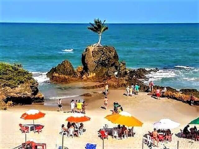 O famoso coqueiro da praia de Tambaba