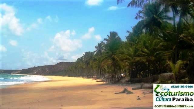 Os famosos coqueiros da praia de Coqueirinho